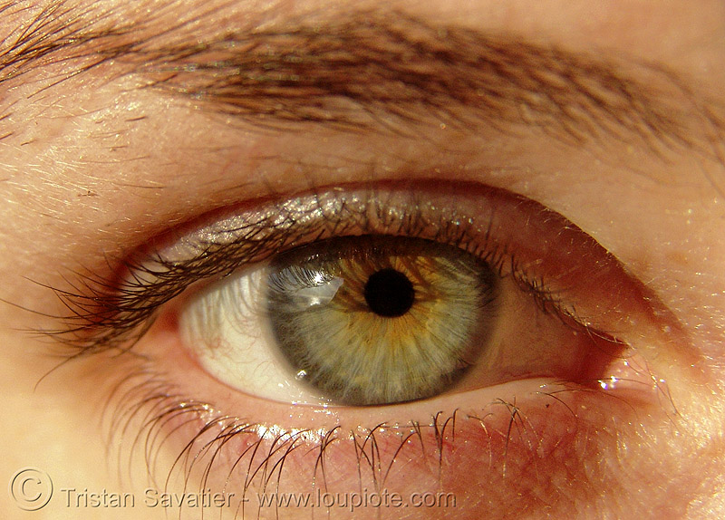 asha's eye, close up, eye color, eyelashes, iris, macro, people, pupil, right eye, woman