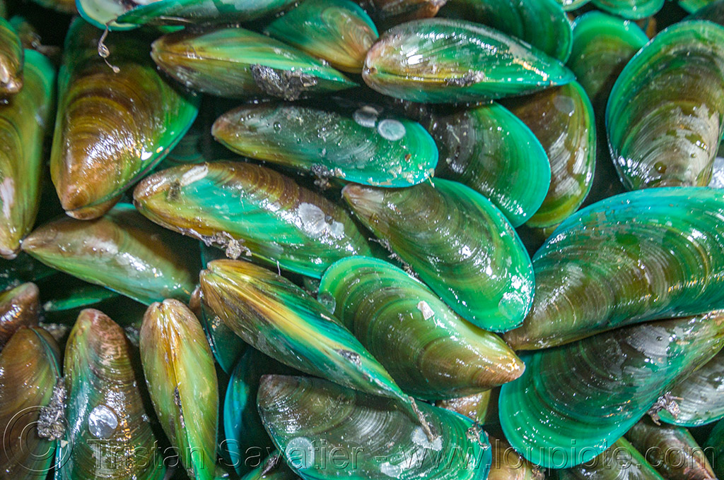 asian green mussels (philippines), baguio, fish market, green mussels, philippines