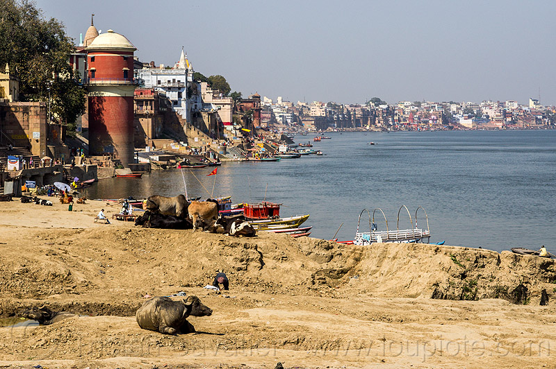 assi ghat - varanasi and the ganges river (india), ganga, ganga river, ghats, river bank, water