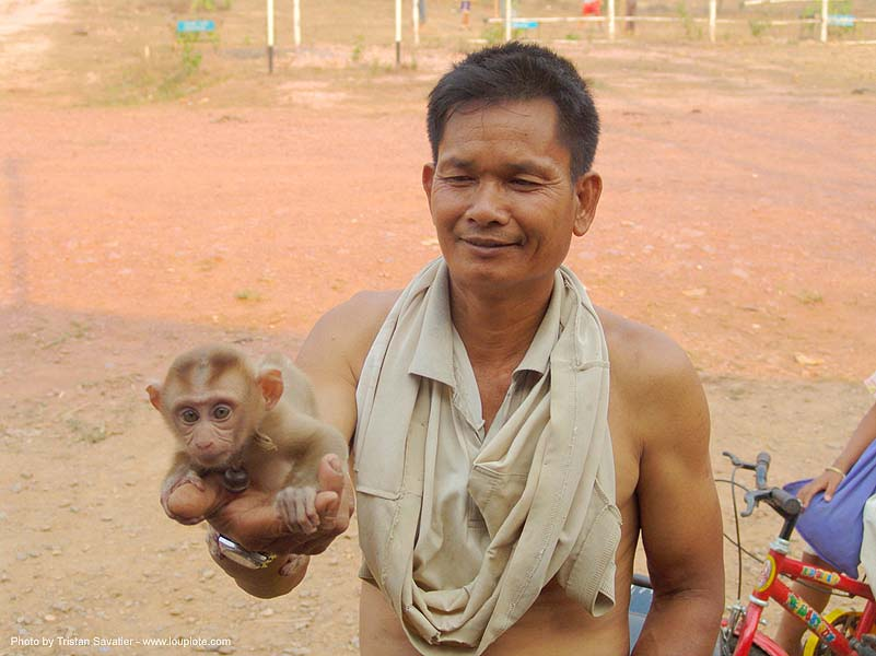 baby monkey in hand - ลิง - thailand, baby monkey, hand, holding, man, pet monkey, wildlife, ประเทศไทย, ลิง