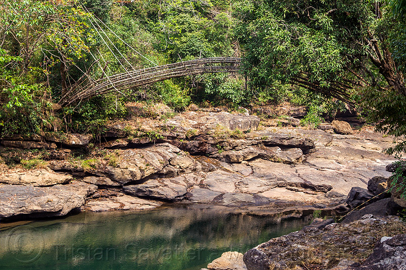bamboo bridge over river (india), bamboo bridge, east khasi hills, footbridge, jungle, mawlynnong, meghalaya, rain forest, river, water