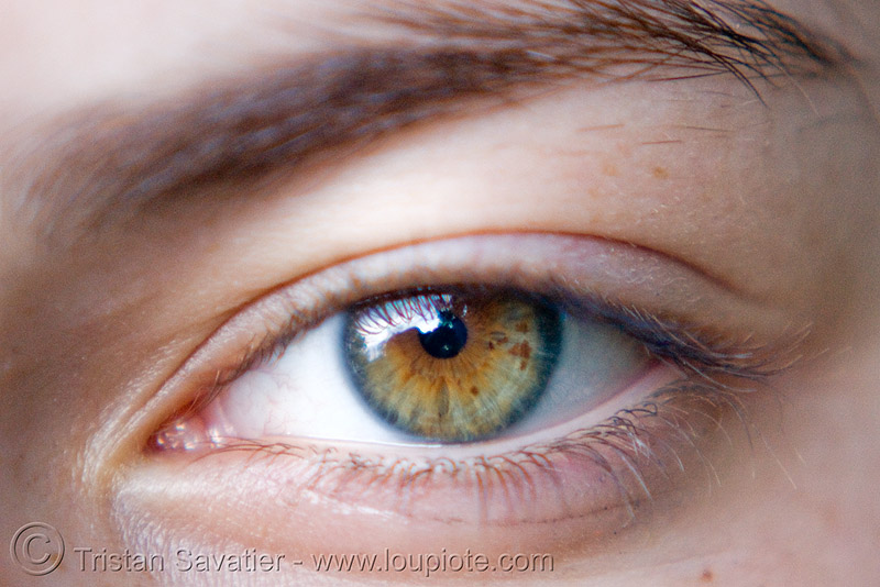 zoey's beautiful eye, close up, eyelashes, freckles, iris, left eye, macro, people, pupil, spots, woman