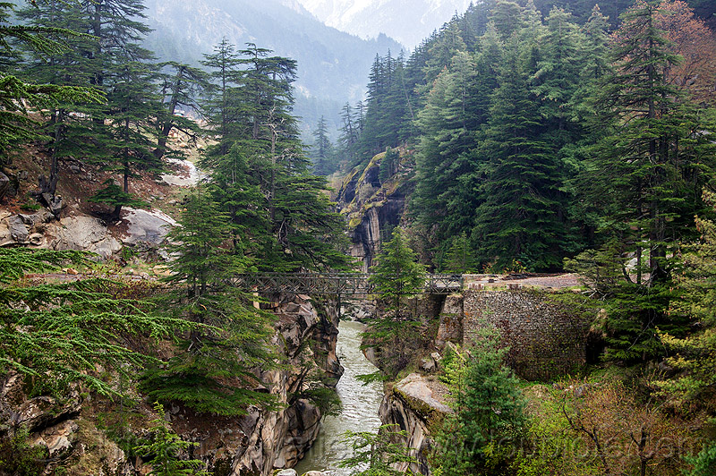 bhagirathi river in narrow gorge (india), bhagirathi river, bhagirathi valley, bridge, canyon, forest, gorge, mountains, river bed, water