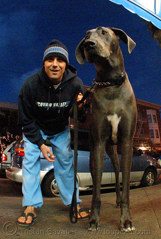 big dog (san francisco), big dog, fisheye, great dane, man