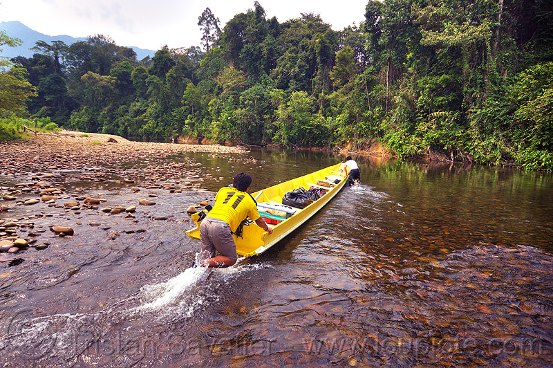 boatmen pushing boat up the shallow waters of the melinau river - mulu (borneo), boatman, boatmen, gunung mulu national park, jungle, melinau river, men, plants, rain forest, river bed, river boat, rocks, shallow river, small boat, sungai melinau, trees, wading, water