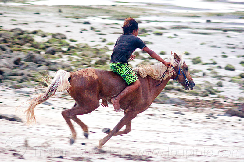 bareback riding, bare feet, beach, boy, bridle, gallop, galloping, horse, horse riding, horseback riding, lombok, man, people, rider, running, skinny, yougster