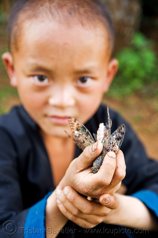 boy with live cicadas (laos), boy, child, cicadas, hands, hintang archaeological park, hintang houamuang, insects, kid, laos, san kong phanh