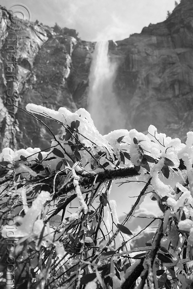 bridalveil waterfall (yosemite), branches, cliff, frozen, ice, mountain, snow, tree, water, winter, yosemite national park