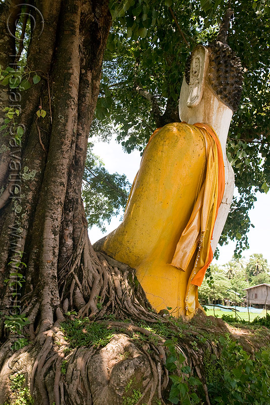buddha statue and tree roots, buddha image, buddha statue, buddhism, cross-legged, khmer temple, laos, tree roots, wat phu champasak