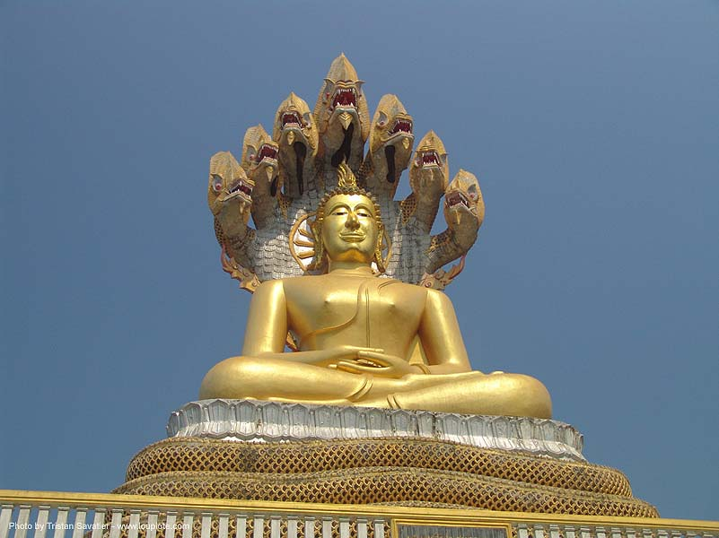พระพุทธรูป - พระพุทธรูปปางนาคปรก - buddha with seven-headed mucalinda snake - Nāga - thailand, buddha image, buddha statue, buddhism, cross-legged, golden color, mucalinda, naga snake, nāga dragon, nāga snake, sculpture, seven-head, seven-headed snake, thailand, พญานาค, พระพุทธรูป, พระพุทธรูปปางนาคปรก