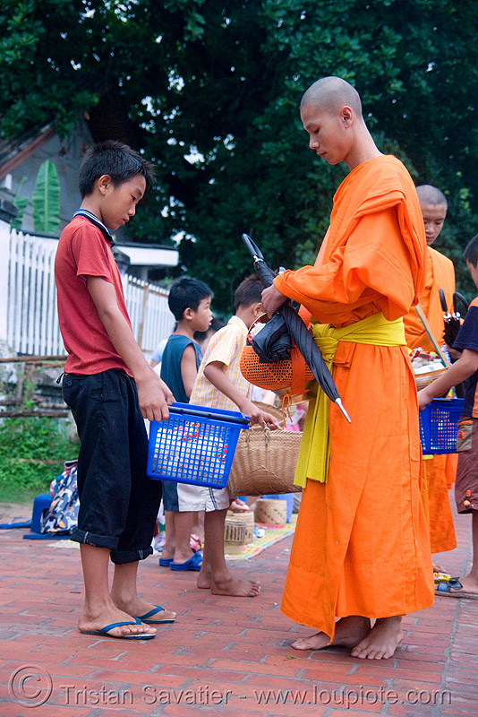 buddhist monks receiving alms at dawn - luang prabang (laos), alms bowl, bhagwa, buddhism, orange, people, rice, saffron color, street
