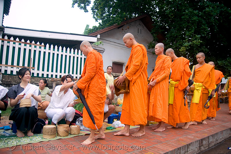 buddhist monks receiving alms - luang prabang (laos), alms bowl, bhagwa, buddhism, buddhist monks, dawn, luang prabang, orange, rice, saffron color, street