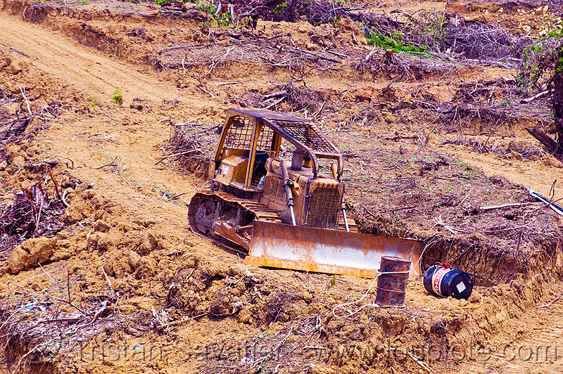 bulldozer used for deforestation (borneo), borneo, bulldozer, deforestation, environment, logging, malaysia
