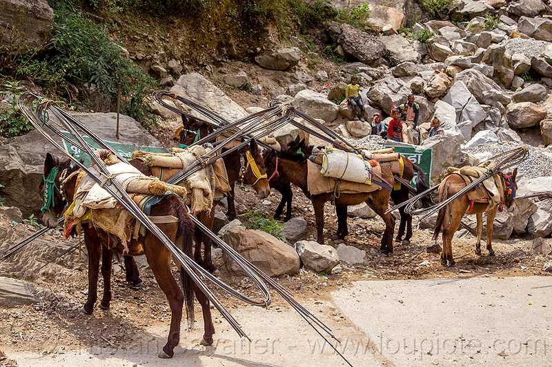 caravan of pack horses carrying rebars (india), alaknanda valley, caravan, carrying, govindghat, india, mountains, mules, pack animals, pack horses, rebars, road, working animals