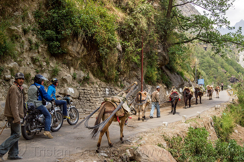 caravan of pack horses carrying rebars on mountain road (india), alaknanda valley, caravan, carrying, govindghat, india, motorcycle touring, motorcycles, mountains, mules, pack animals, pack horses, rebars, road, royal enfield bullet, working animals