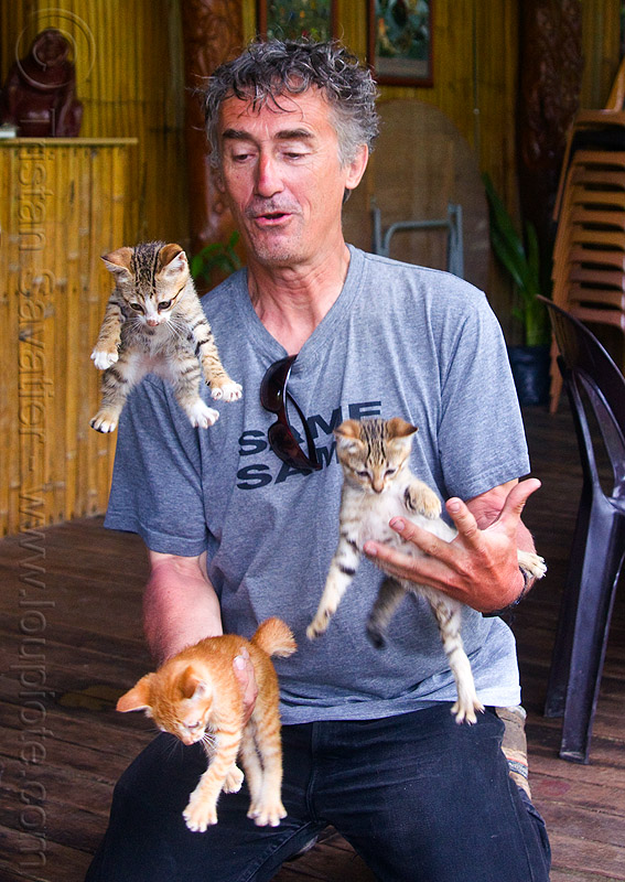 cat juggling, borneo, cat juggling, cats, flying, ginger kitten, juggler, kittens, mackerel tabby, malaysia, man, self portrait
