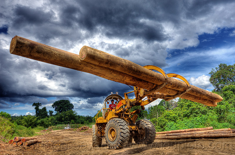 caterpillar 966C carrying tropical tree logs, at work, cat 966c, clouds, cloudy sky, deforestation, environment, front loader, heavy equipment, hydraulic, logging, logging camp, logging forks, machinery, tree logging, tree trunks, wheeled, wheeled loader, working, yellow
