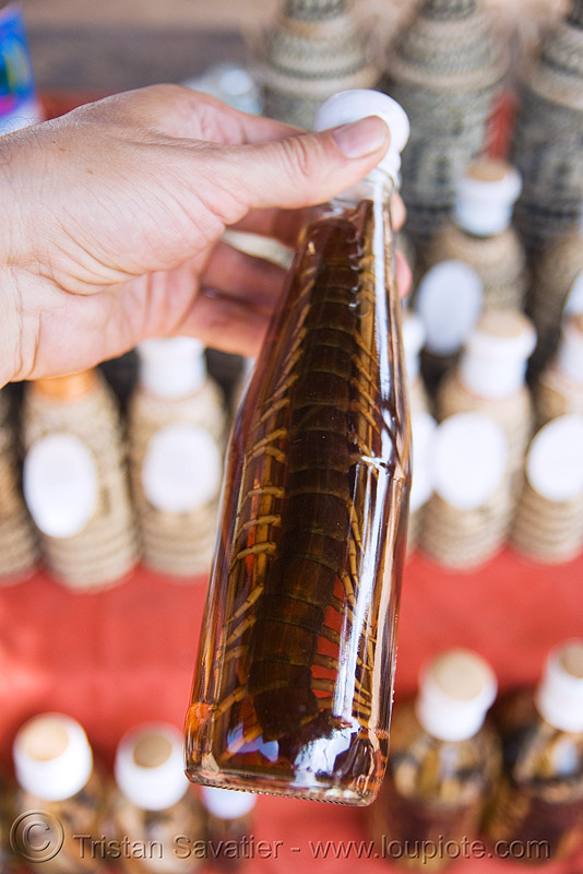 centipede wine - laos, beverage, bottles, centipede, lao whisky, lao-lao, liquor, luang prabang, pak ou caves temples, rice alcohol, rice whisky, rice wine, vodka, whisky village