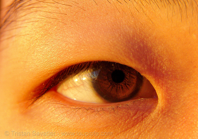 chinese eye, asian woman, chinese woman, close up, eye color, iris, macro, people, pupil, right eye, sharon