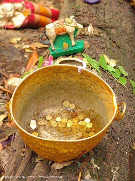coins offering in golden pot - thailand, altar, coins, golden color, offerings, tree, ประเทศไทย