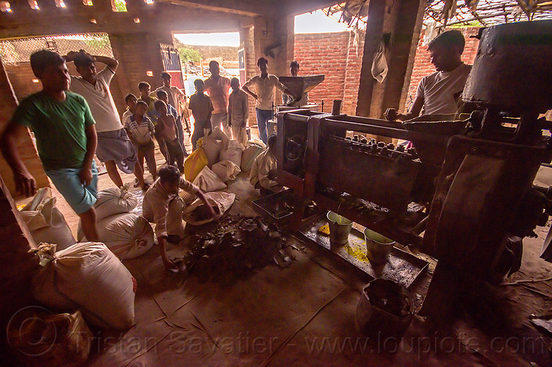 communal oil press machine in indian village, crowd, india, khoaja phool, machine, oil press, village, खोअ�\x9cा फूल