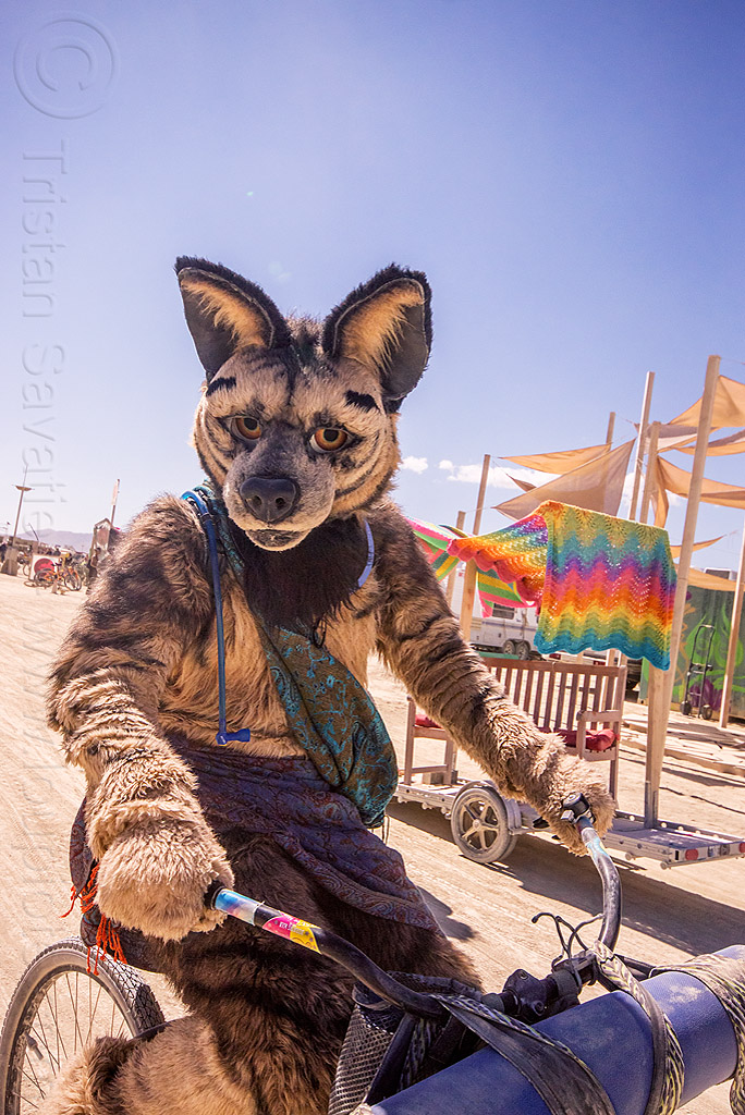 cosplay - coyote costume - burning man 2015, bicycle, fur, furry, people, riding