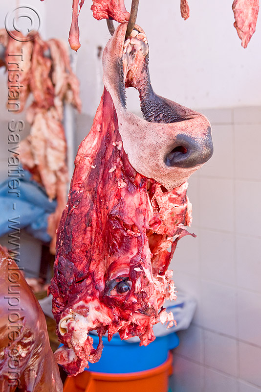 cow head - deboned, beef nose, bolivia, deboned, hanging, head, hook, meat market, meat shop, potosí, raw meat, snout