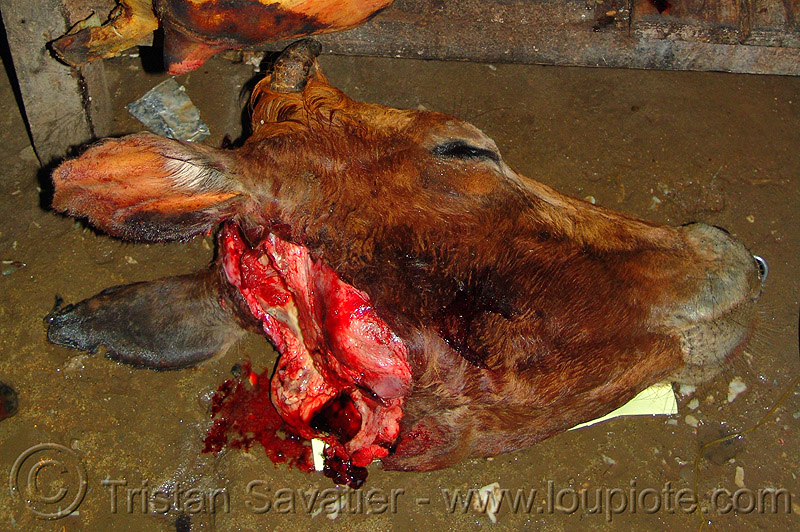 cow head - severed, animal rights, beef, carcass, meat, meat market, meat shop, raw, raw meat, sapa, severed head
