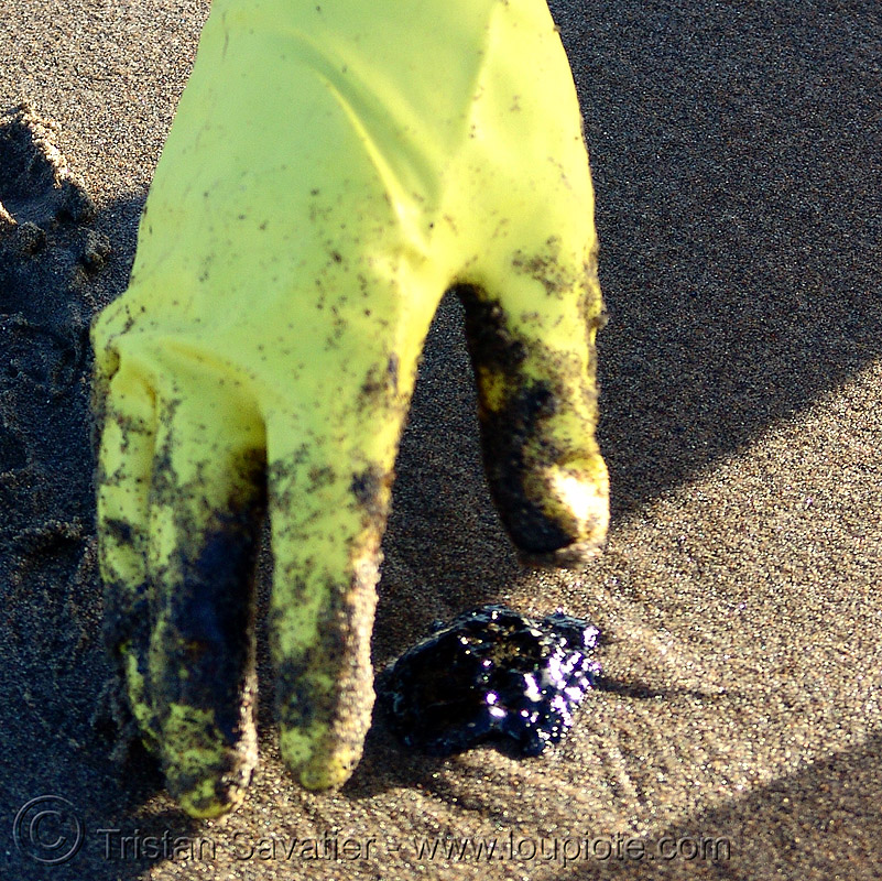 crude oil pollution clean-up, bunker oil, clean-up, crude oil, environment, glove, ocean beach, oil leak, pollution, san francisco oil spill, sand
