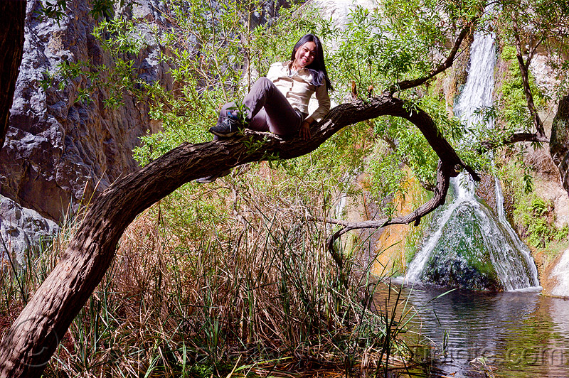 darwin falls, darwin falls, death valley, sharon, tree, water, waterfall, woman