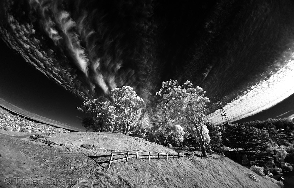 daylight infrared fisheye photo of the san francisco sky, clouds, daylight infrared, fisheye, near infrared, sutro tower, tank hill, trees