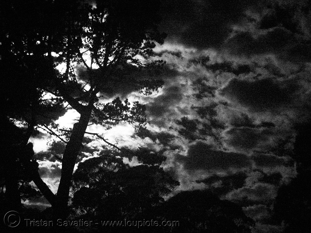 daylight infrared photo of tree and cloudy sky (san francisco), backlight, clouds, cloudy sky, daylight infrared, near infrared, tree
