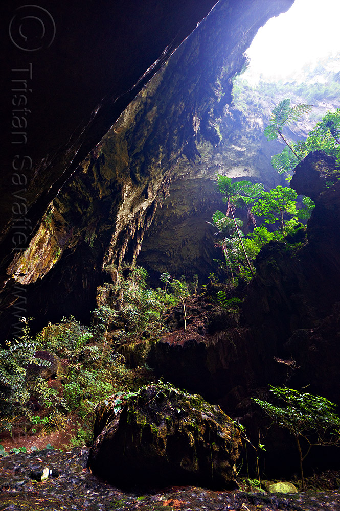 deer cave entrance - mulu (borneo), backlight, cave mouth, caving, deer cave, ferns, gunung mulu national park, natural cave, plants, spelunking