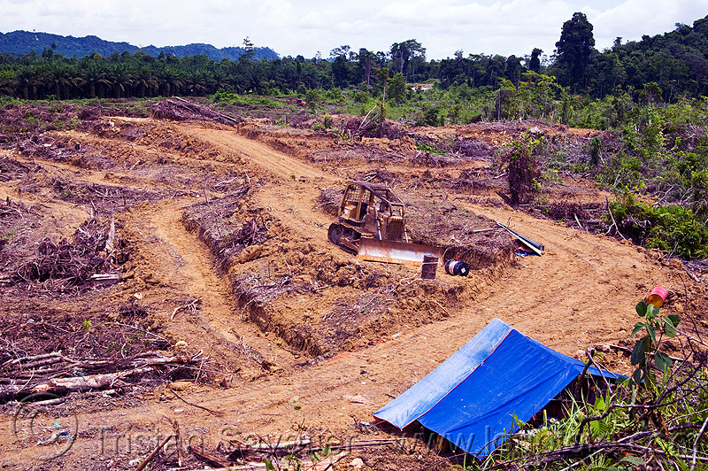 deforestation, bulldozer, deforestation, environment, logging