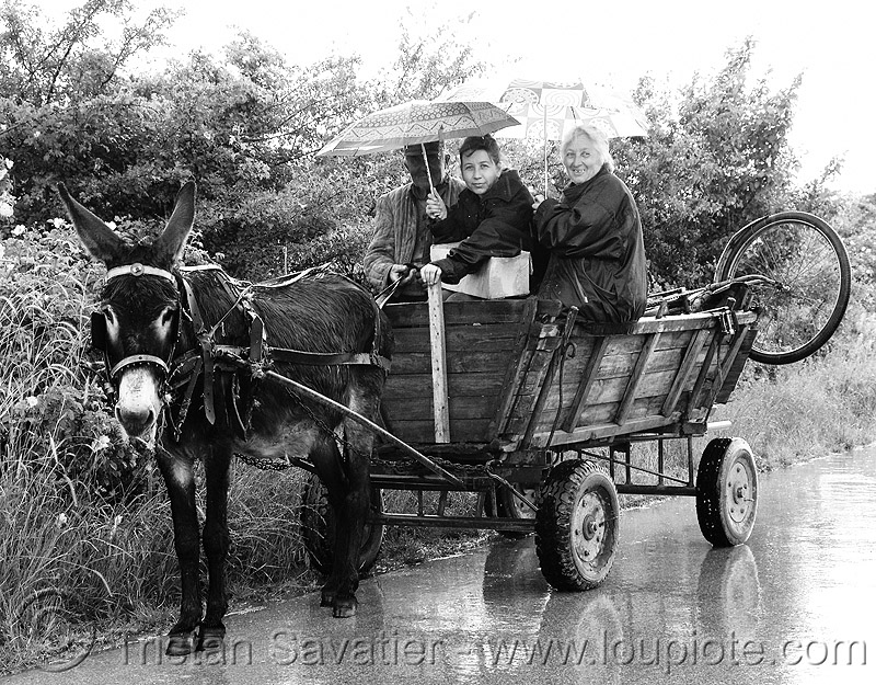 donkey-wagon - peasans - road (bulgaria), asinus, bicycle, donkey cart, donkey wagon, equus, horse cart, man, peasants, poor, raining, road, umbrellas, women, working animal, българия