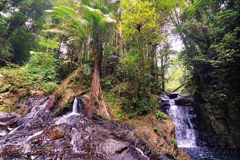 double waterfall - garden of eden - mulu (borneo), falls, forest, gunung mulu, gunung mulu national park, jungle, rain forest, river, water