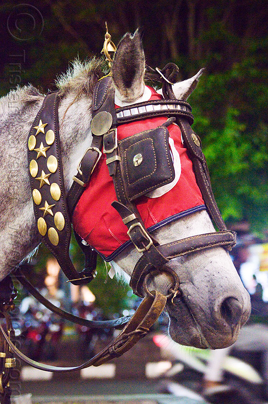 draught horse with bridle, hood and blinders, bridle, draft horse, draught horse, horse hood, horse mask, indonesia, jogja, malioboro, night, red, white horse, yellow, yogyakarta