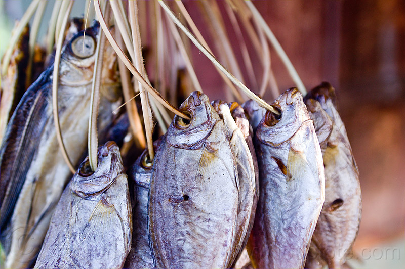 dried fishes on strings, dried, dry, fishes, food, hanging, preserved fish, rattan, salted fish, smoked fish, string