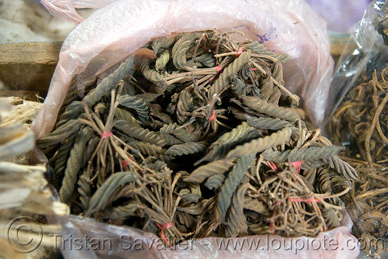 dried medicinal plant (laos), dried, dry, market, medicinal herbs, medicinal plants, spiral, twisted, unidentified plant