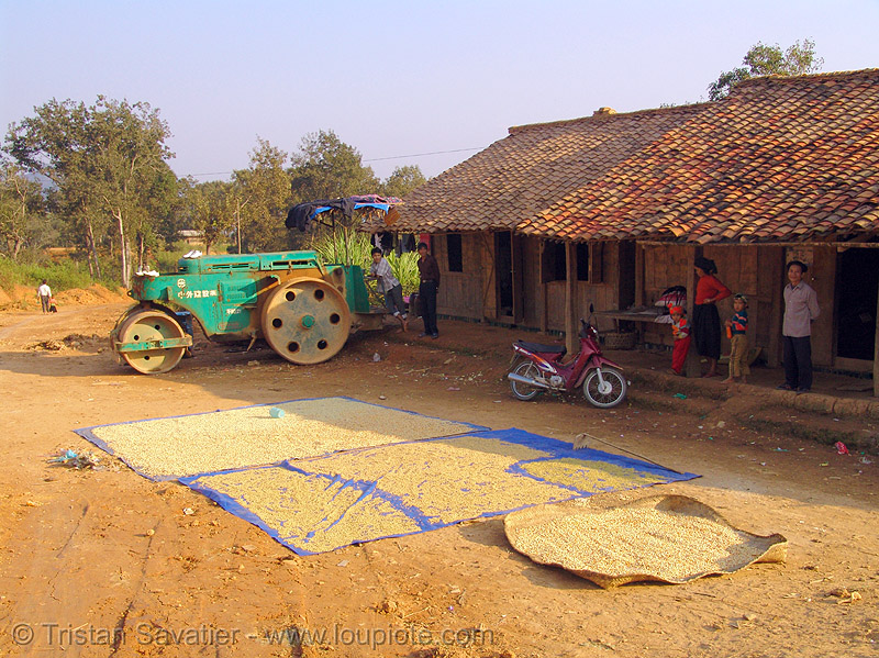 drying beans on the road - vietnam, heavy equipment, machinery, road construction, road roller, roller-compactor, sun drying
