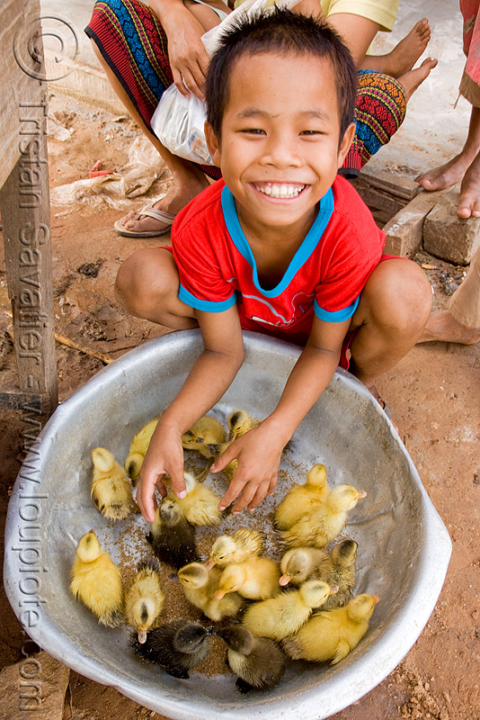 ducklings and kid (laos), baby ducks, birds, boy, child, people, poultry