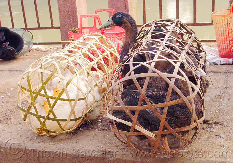 ducks in bamboo cages, birds, cao bang, cao bằng, live, market, poultry