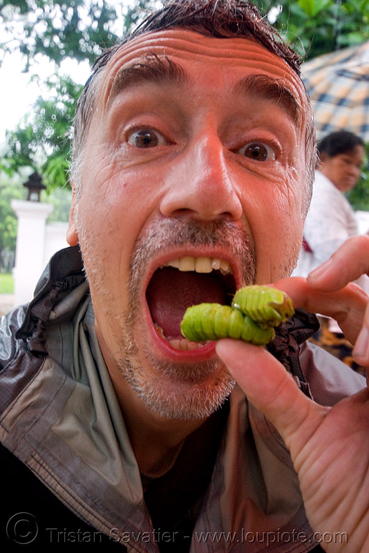 eating live bugs, alive, eating bugs, eating insects, edible bugs, edible insects, entomophagy, food, larva, larvae, live, luang prabang, man, self portrait, selfie, tristan savatier, worms