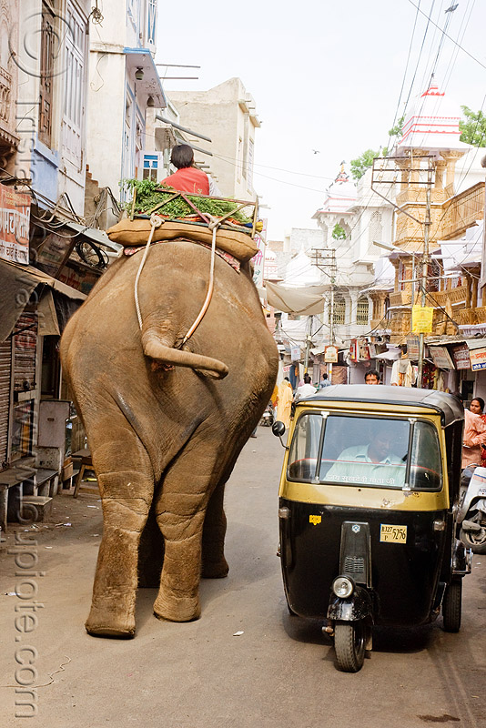 elephant and auto-rickshaw, asian elephant, autorickshaw, elephant riding, mahout, man, public transportation, rickshaw, street, three wheeler, tricycle, udaipur