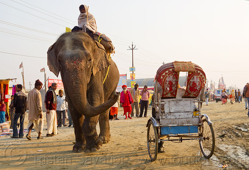 elephant and cycle rickshaw (india), elephant riding, elephant trump, kumbh mela, kumbha mela, maha kumbh, maha kumbh mela, mahout, man, people, street