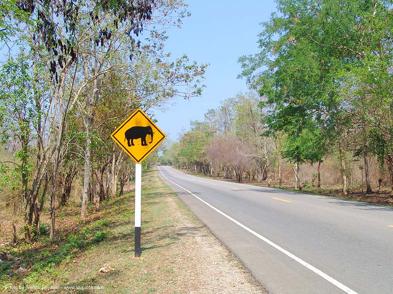 ช้าง - elephant crossing road sign - thailand, elephant, lozenge, road sign, traffic sign, yellow, ช้าง, ประเทศไทย