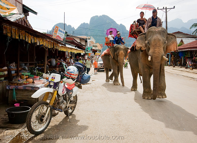 elephant riding - honda XR 250 - vang vieng (laos), 250cc, asian elephant, dual-sport, elephant riding, elephants, honda motorcycle, honda xr 250, mahout, man, motorbike touring, motorcycle touring, road, street, vang vieng