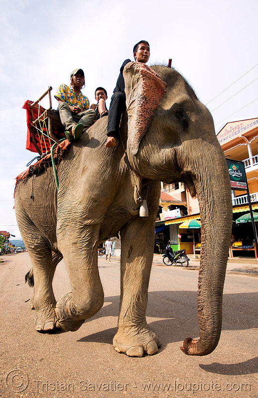 elephant riding - vang vieng (laos), mahout, man, people, street