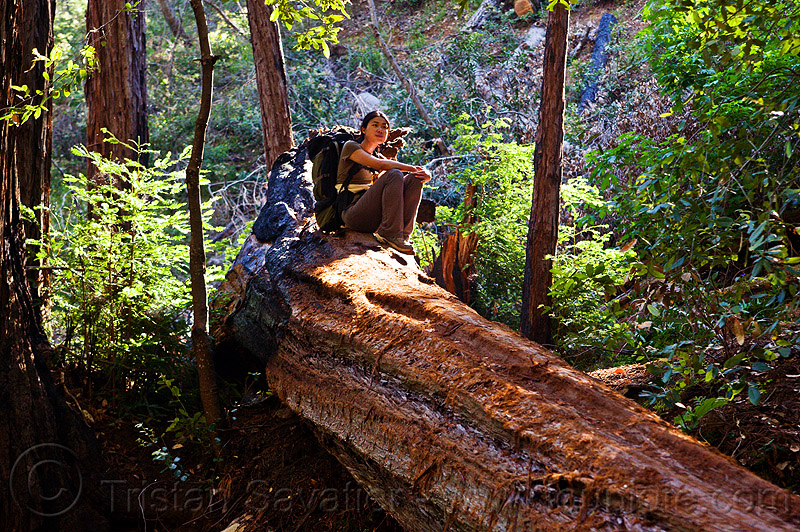 fallen redwood tree, backpack, backpacking, big sur, fallen tree, forest, people, pine ridge trail, resting, sempervirens, sequoia, sequoia sempervirens, sharon, sitting, tree bridge, tree trunk, trekking, vantana wilderness, woman