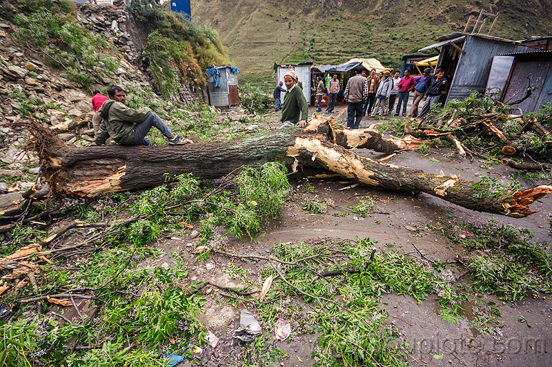 fallen tree after storm (india), bhagirathi valley, broken, broken tree, men, people, road, storm damage, village